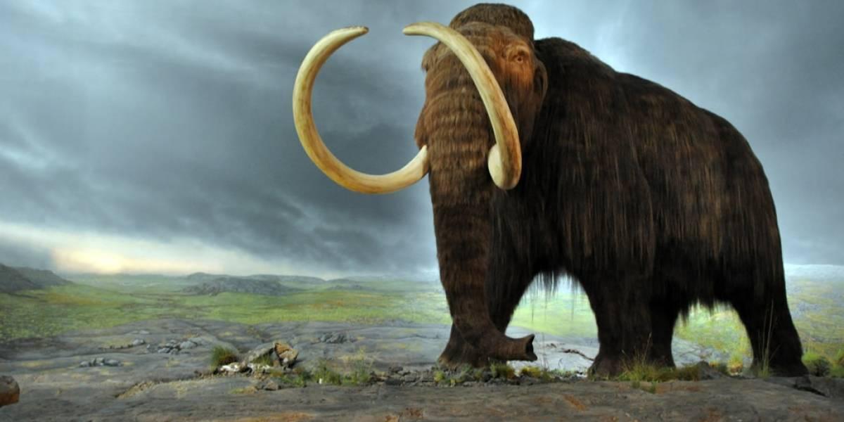 Granjero de Michigan descubrió una osamenta de mamut