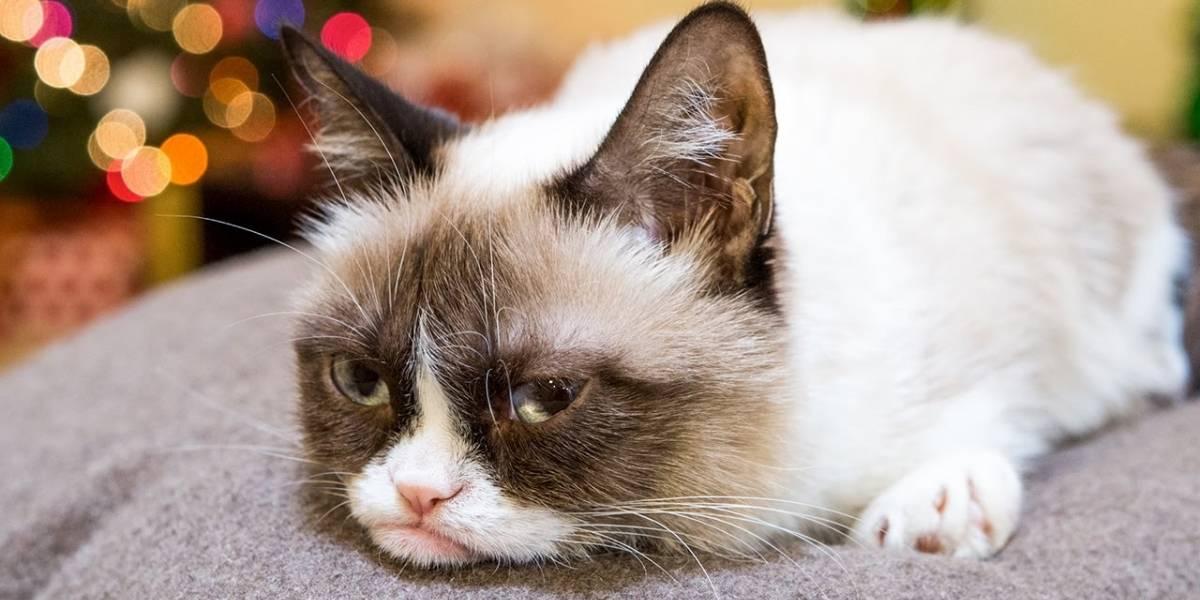 Se ha logrado secuenciar el genoma del gato doméstico