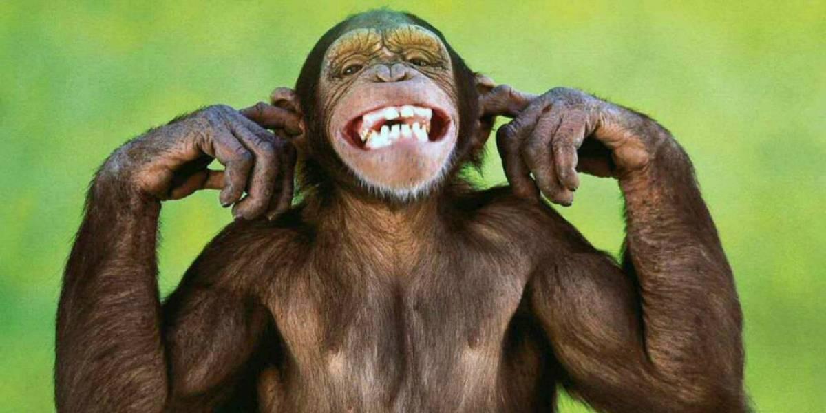 Un mono logró controlar una silla de ruedas con su mente