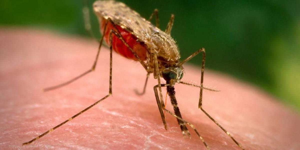 El secreto de la atracción entre las personas y los mosquitos
