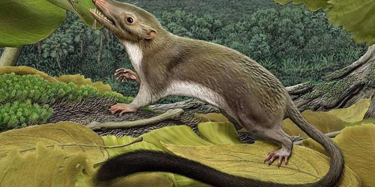Así fue el primer mamífero con placenta de la historia