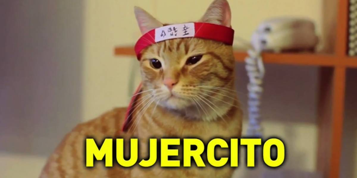 Chile: Gatos conspiran contra Internet, campaña busca defenderla (Video)