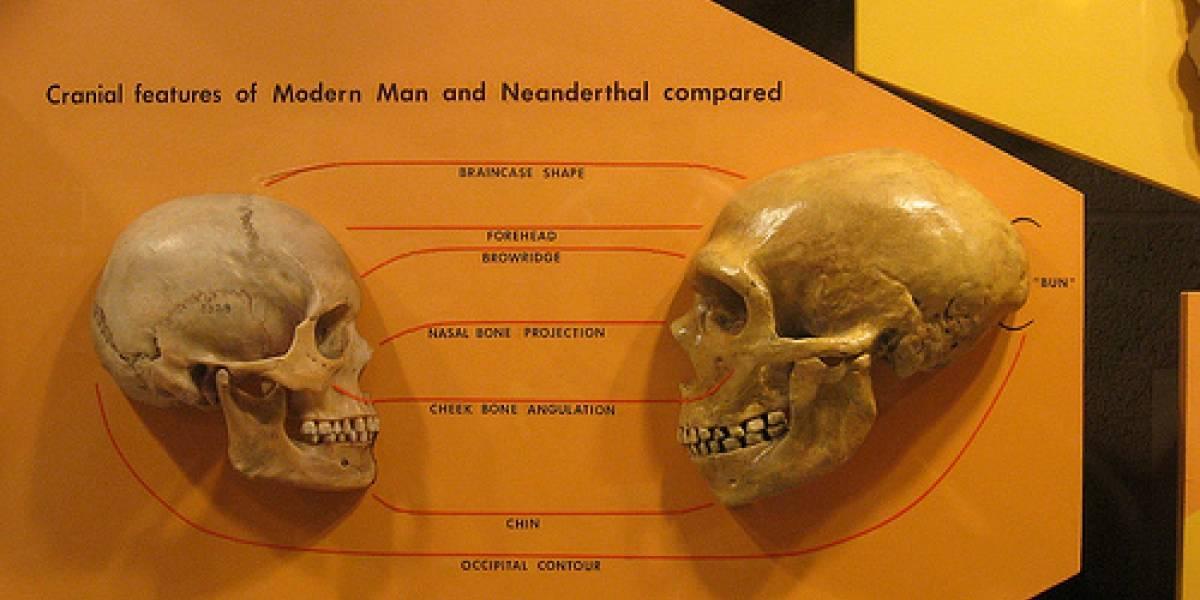 Cerebros de los humanos y neandertales recién nacidos eran similares