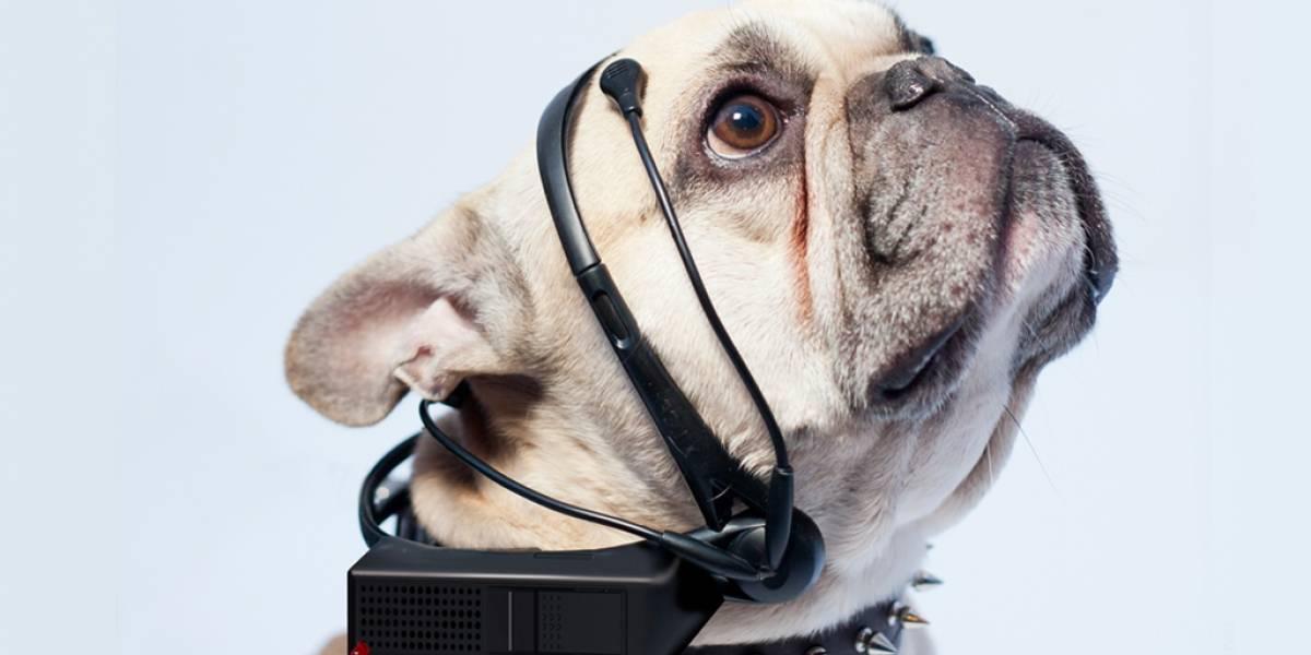 Este cintillo busca leer el pensamiento de los perros
