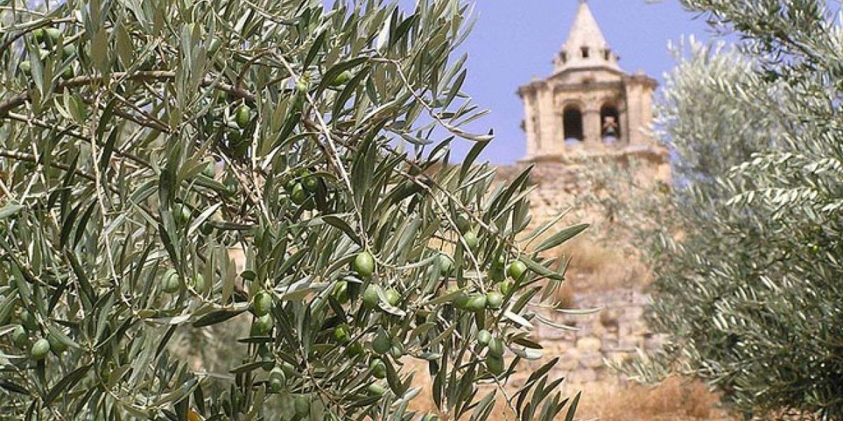 Investigan una molécula extraída del olivo que evitaría el contagio del VIH