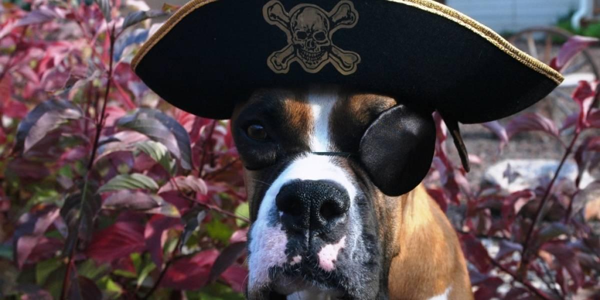 No hay impacto significativo de la piratería en el ingreso de taquilla, revela economista