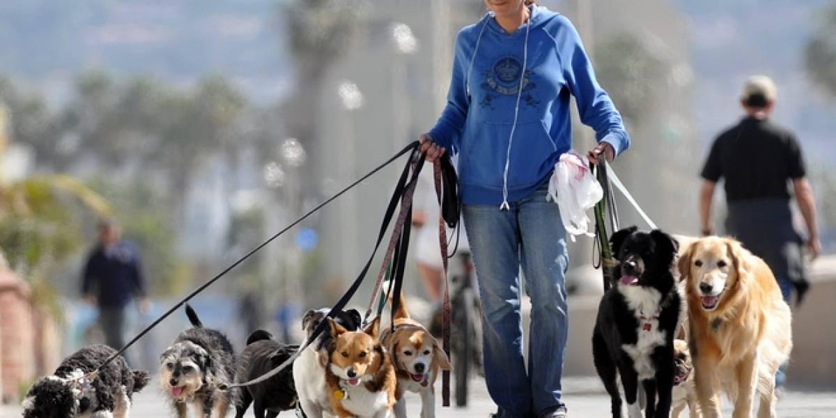 México: Cambia el popó de perro por internet gratis