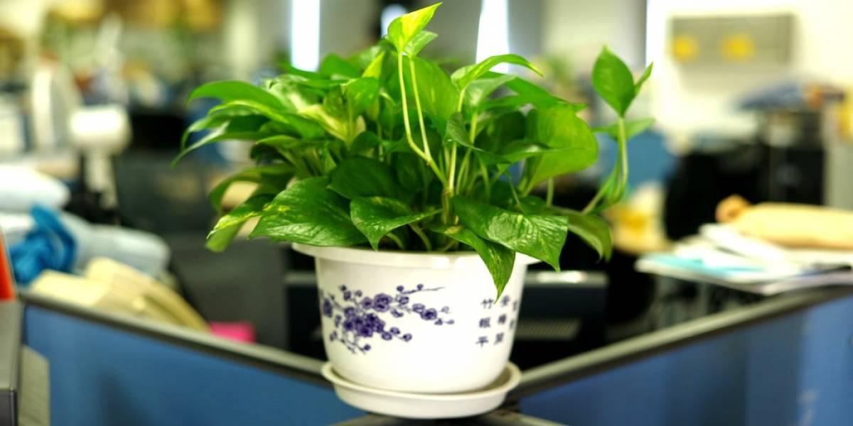 Espacios laborales adornados con plantas resultan favorables para la productividad
