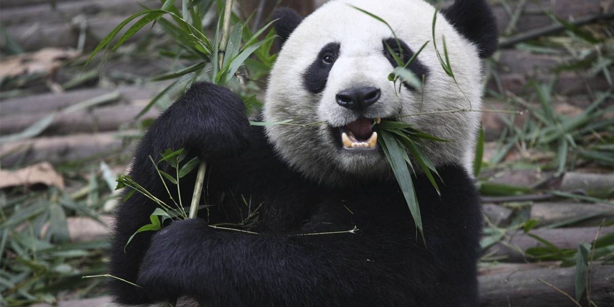 Antivirus de Panda se reconoce a sí mismo como un virus
