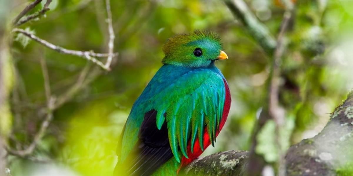 México: Nace en cautiverio ave en peligro de extinción y los transmiten por internet