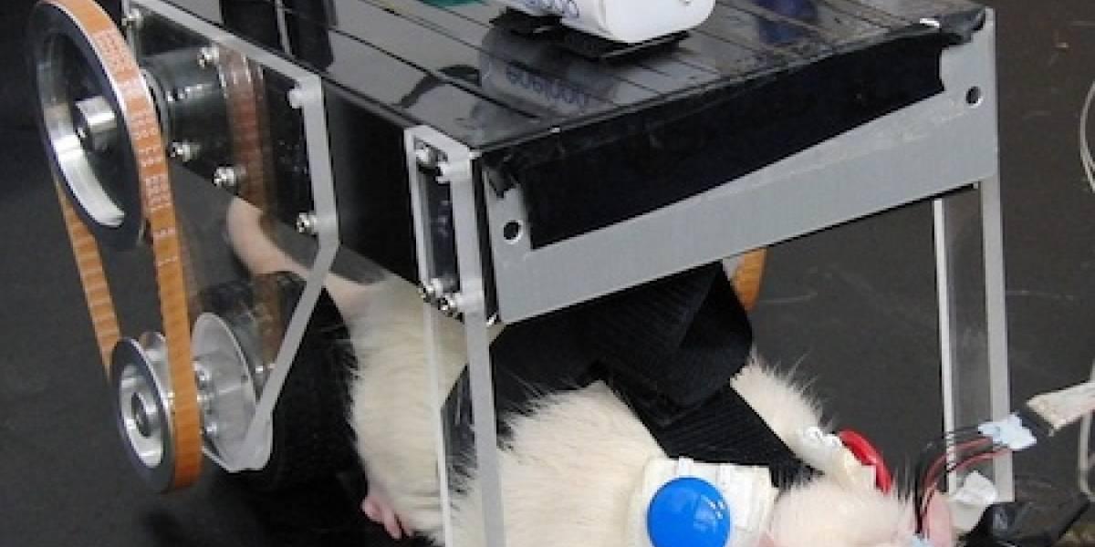 Japoneses crean auto robot controlado por el cerebro de una rata