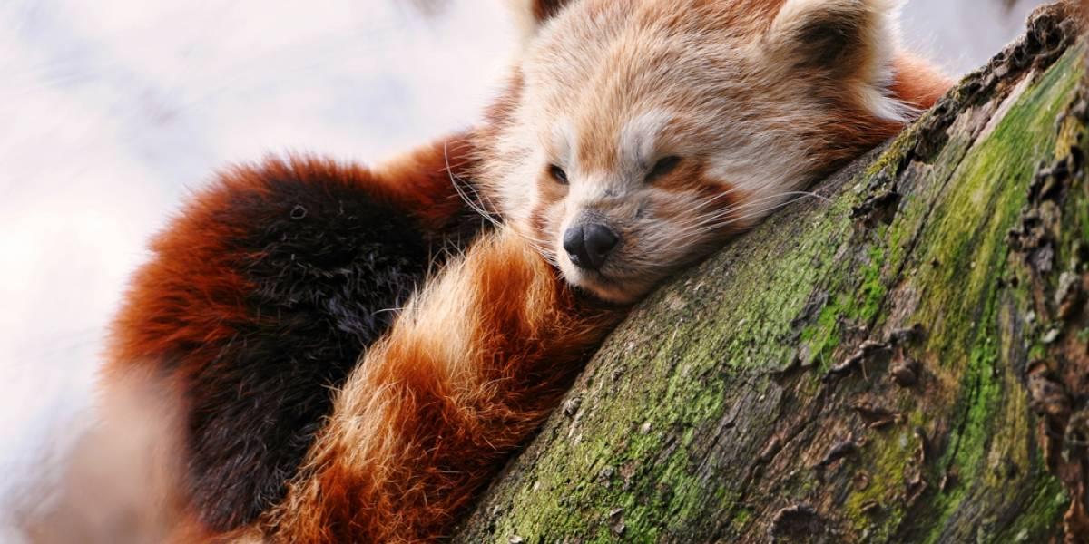 Firefox se ha renovado, pero no llega a liderar