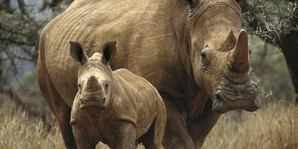 Científicos podrían salvar especies en peligro de extinción a partir de células de piel