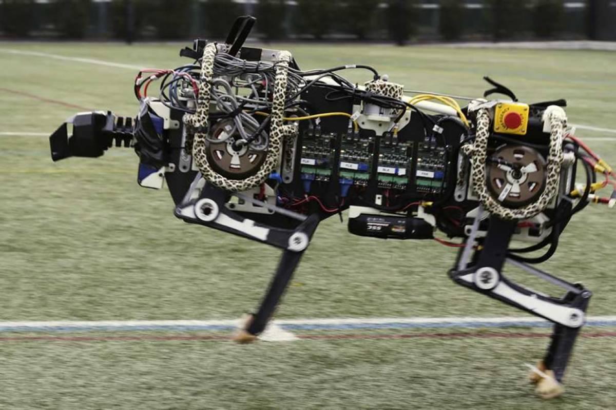 Mira los saltos del majestuoso robot chita del MIT