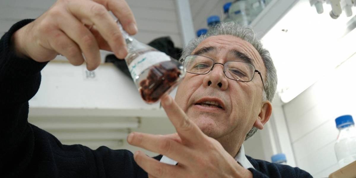 Renunció Bernabé Santelices a la presidencia de la Conicyt, tras 2 meses en el cargo