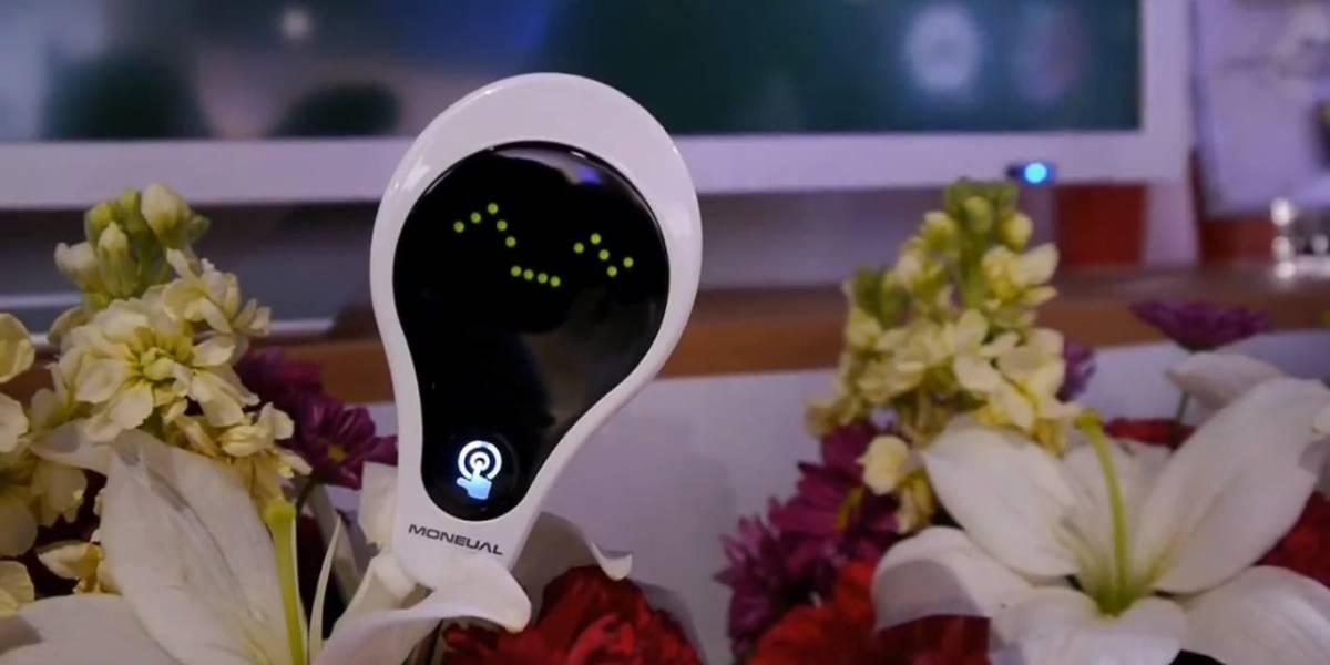 CES 2013: El Smart Communicator Plant Care hace que tu planta te hable cuando necesite agua