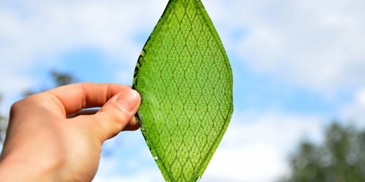 Estudiante crea la primer hoja bioartificial que convierte luz y agua en oxígeno