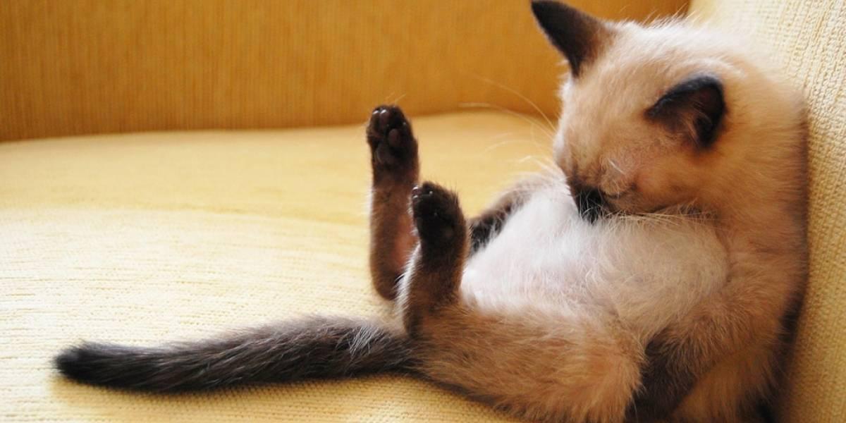 Estudio revela que el acceso a la electricidad está ligado a un menor tiempo de sueño