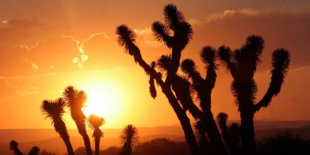 México podría producir 12,000 MW renovables para el 2020