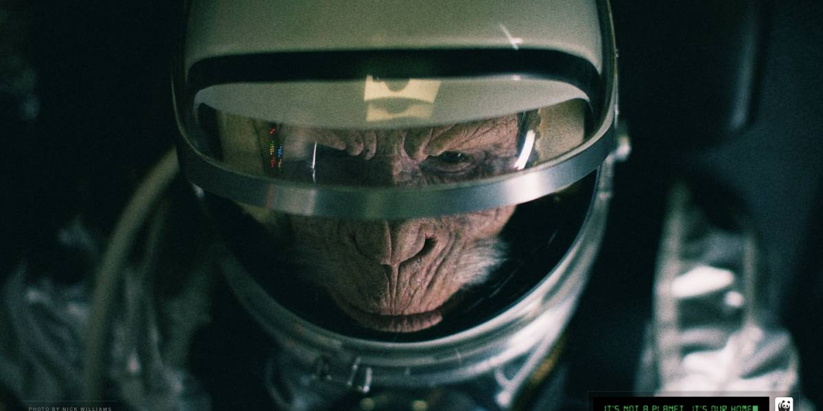 Irán anuncia que enviará un segundo mono al espacio en noviembre