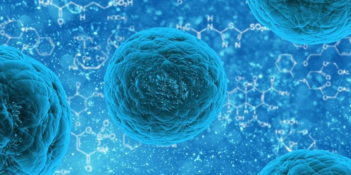 Células madre contribuirían a detener la calvicie