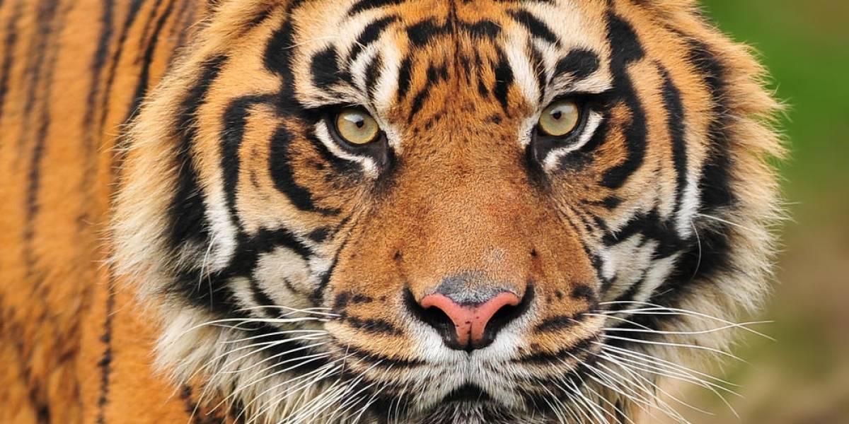 Google entrega US$ 5 millones a la WWF para monitorear animales en peligro con drones