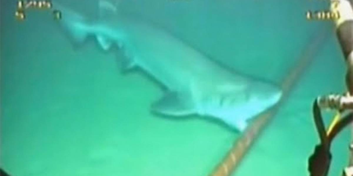 Internet está siendo atacada por tiburones