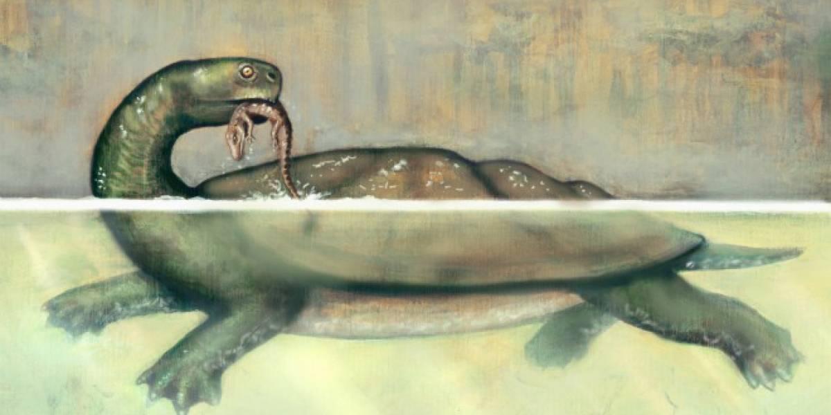Descubren fósil de tortuga gigante en mina de carbón al norte de Colombia