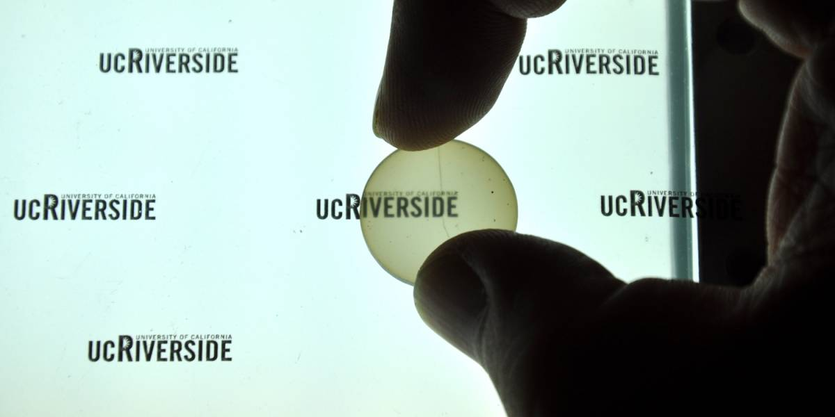 Desarrollan implante craneal transparente para ver directamente al cerebro