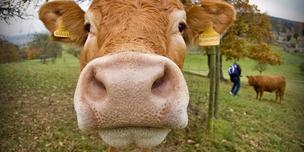 Uruguay: Científicos crean piel sintética a partir de colágeno bovino