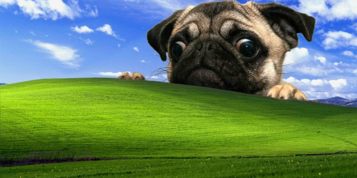 Windows 10 crece rápido y XP disminuye su cuota de mercado