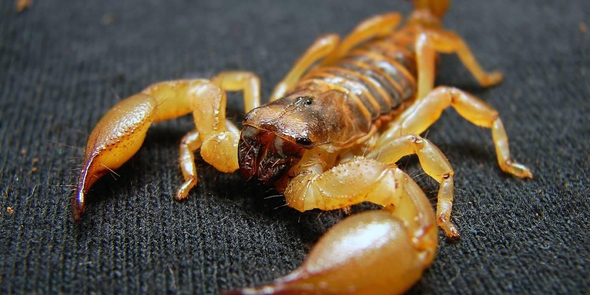 China: Crean superficie resistente a la abrasión de la arena similar al escudo de los escorpiones
