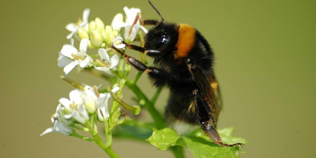Niños de 8 años publican estudio sobre abejas en revista científica