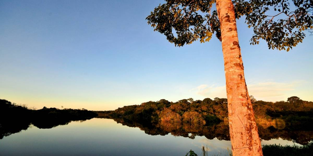 Latinoamérica protesta para que el dominio .amazon corresponda al río Amazonas