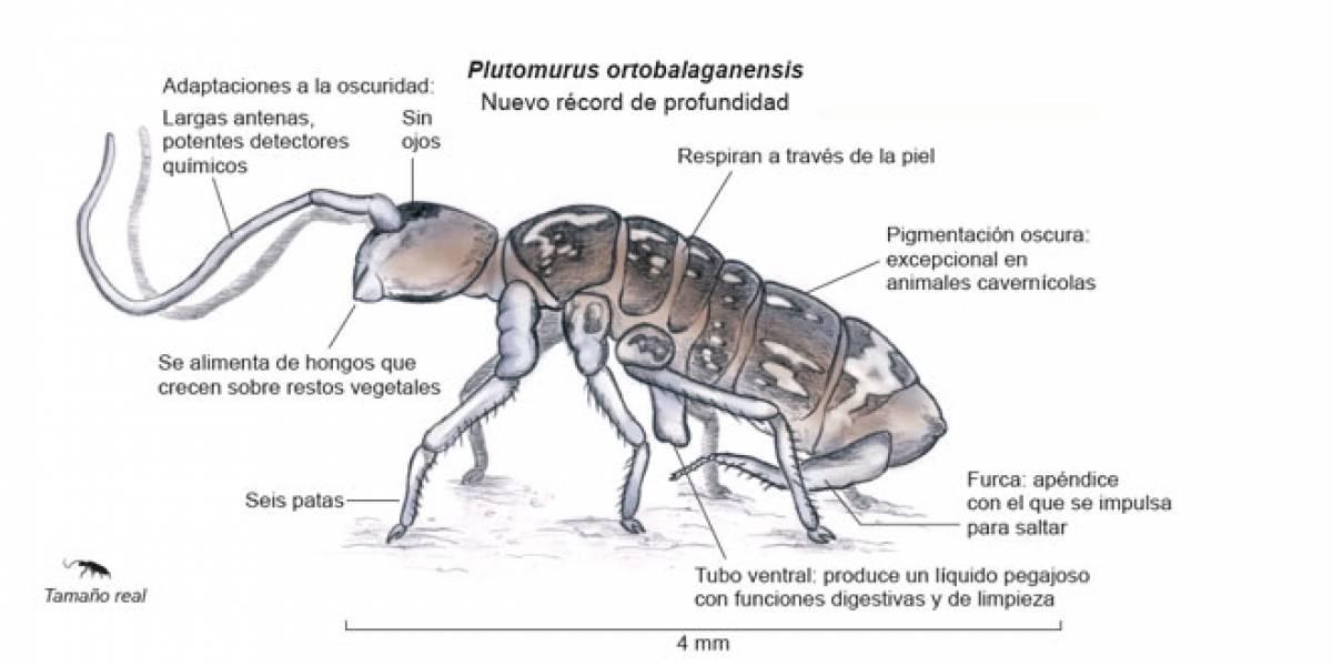 Científicos españoles encuentran los animales que viven a mayor profundidad en la Tierra