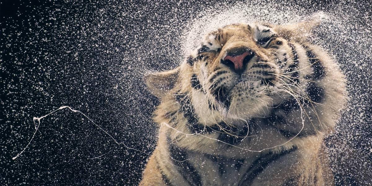 Animales en peligro de extinción como nunca los habías visto
