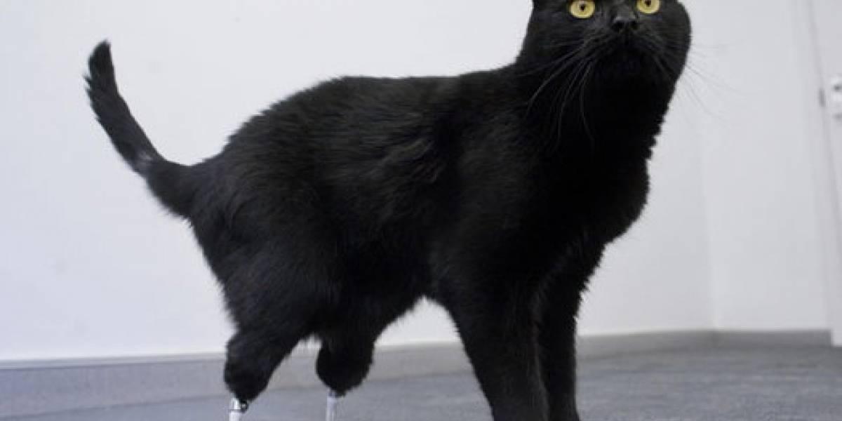 Oscar, el gato biónico