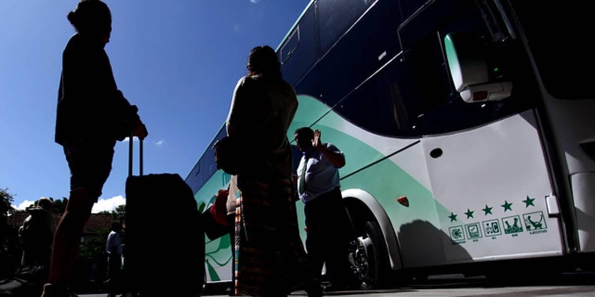 México: encuentran 222 reptiles y anfibios dentro de un bus camino a Toluca