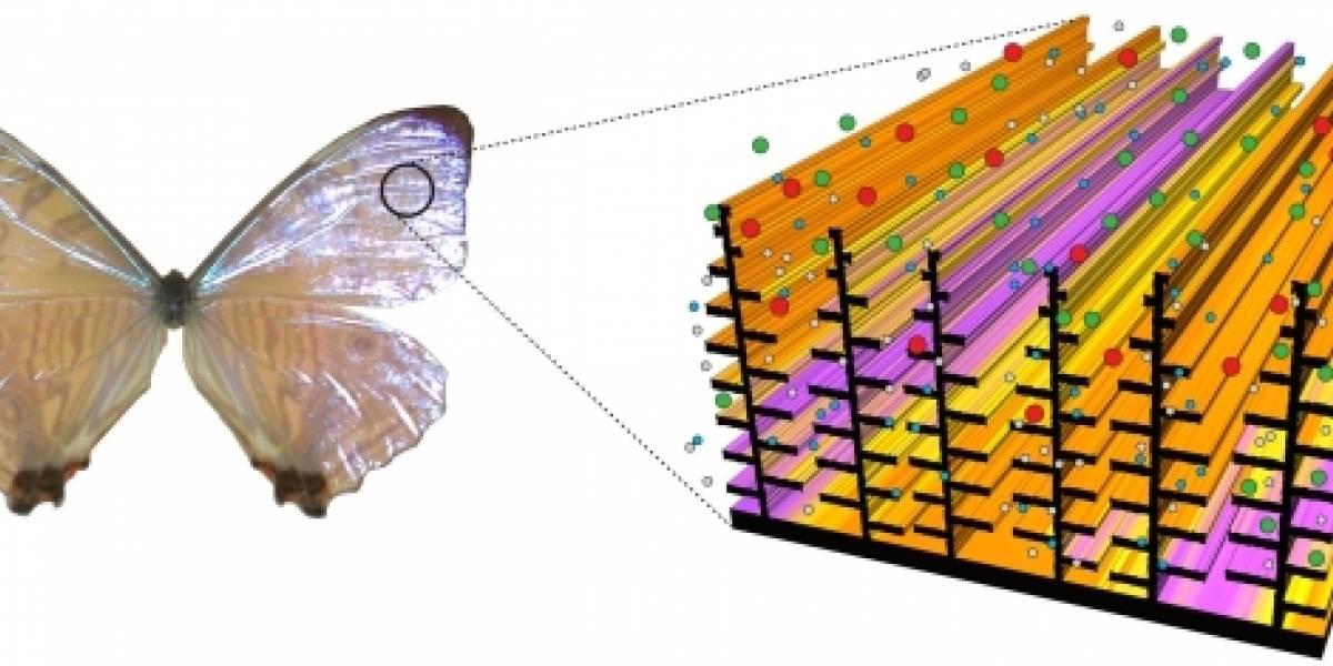 Investigan desarrollar sensores inspirados en organismos biológicos
