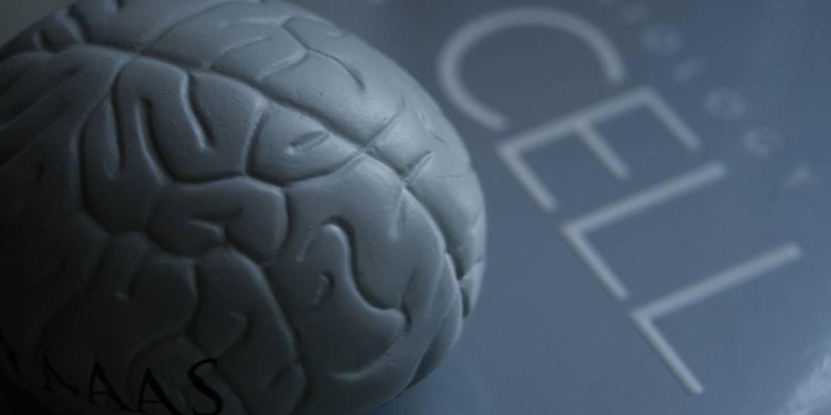 Científicos lograron crear células del cerebro humano