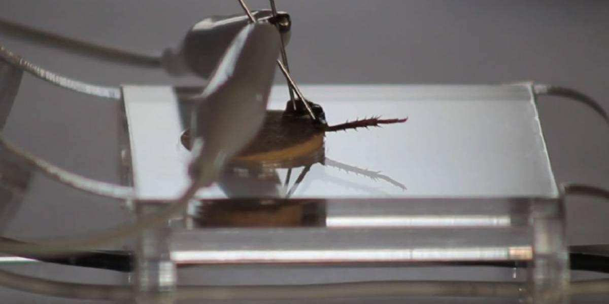 Cerebro humano conectado a una pata de cucaracha (Video)