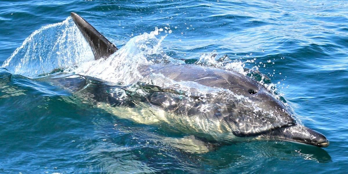Científicos descubren más evidencia de que los delfines se llaman con nombres