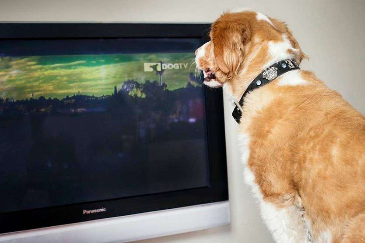 Ahora tu perro contará con un canal dedicado de televisión