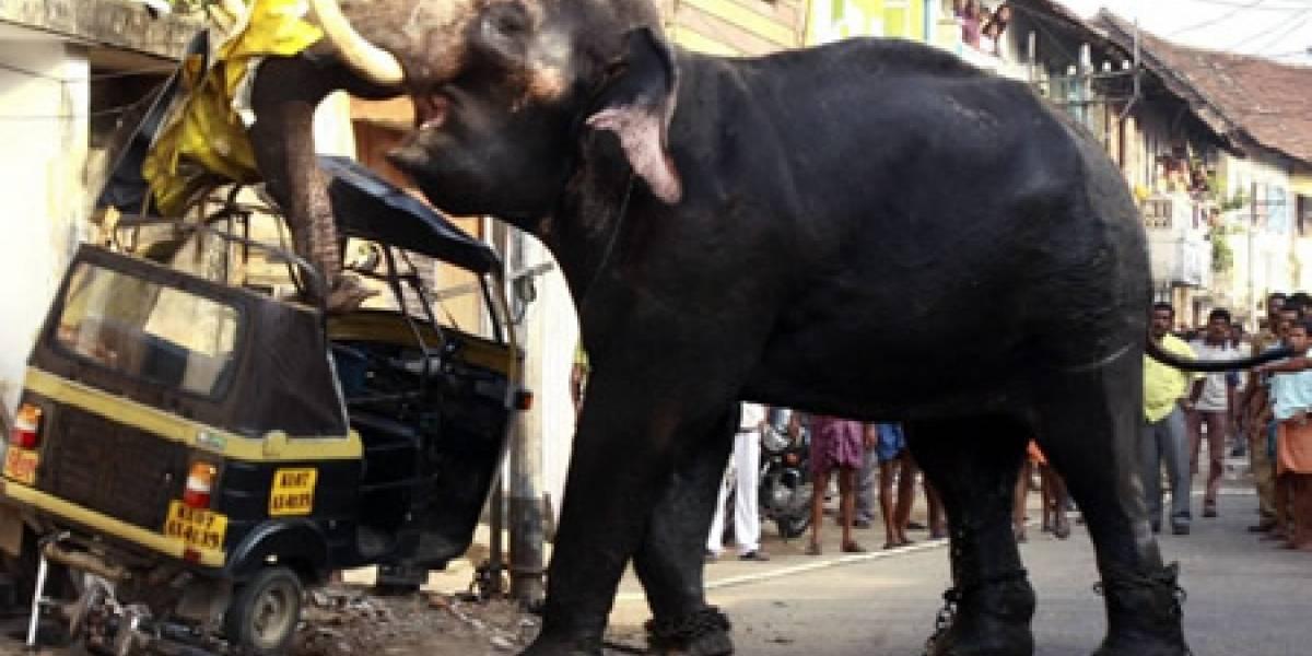 Elefantes con chips para evitar problemas urbanos