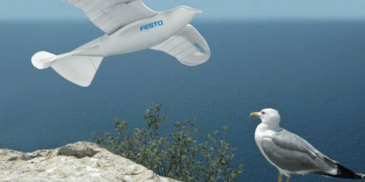 SmartBird, la gaviota robot con vuelo (casi) natural y absolutamente autónomo