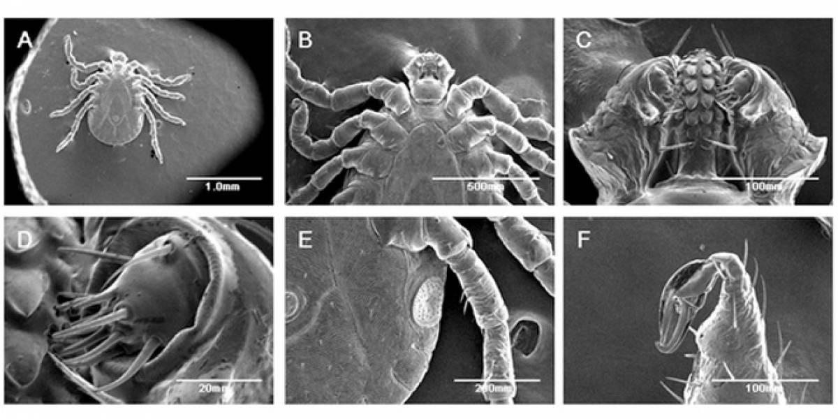 Captan a los primeros insectos que sobreviven al microscopio de electrones