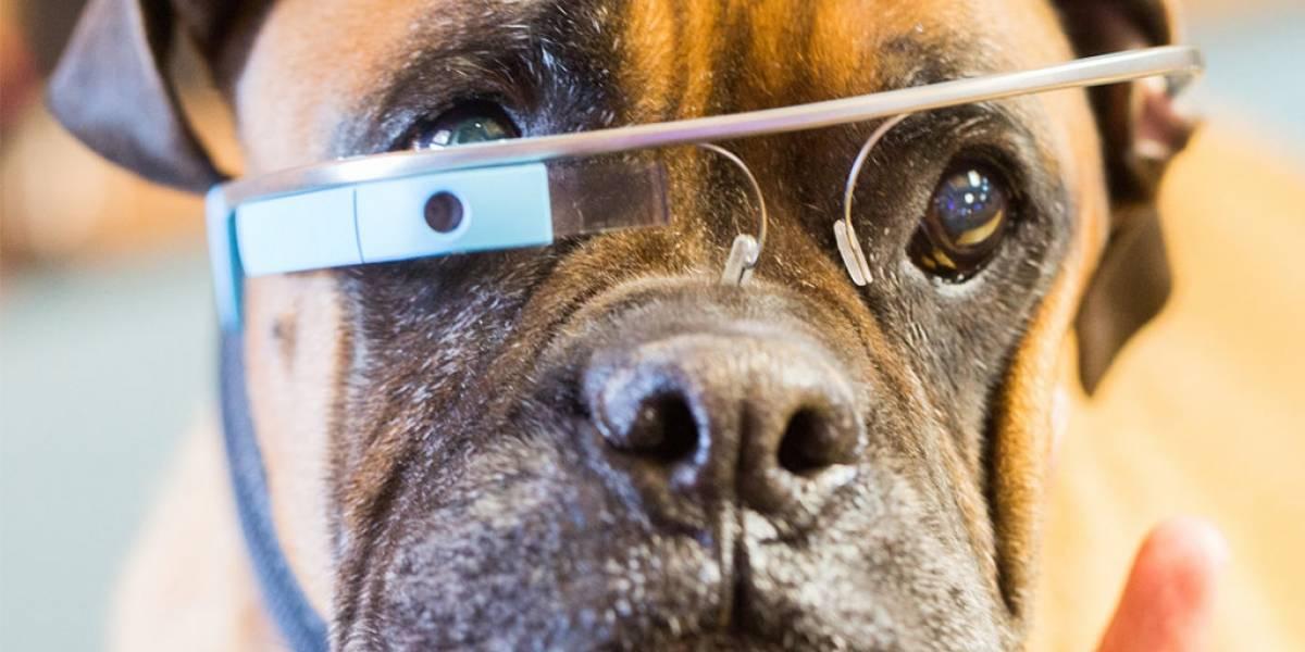 Google Glass podría tener una versión para perros