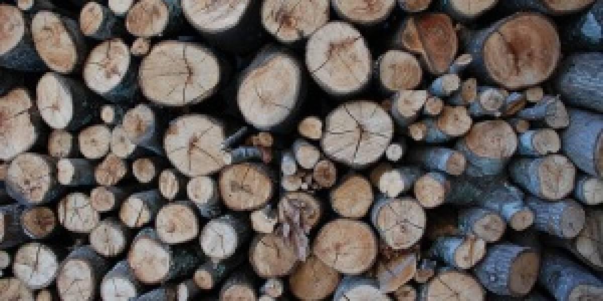 CRT de Colombia quiere acabar con los árboles