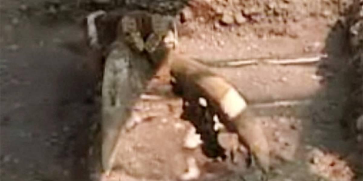 Chile: Descubren el primer cráneo completo de un mastodonte