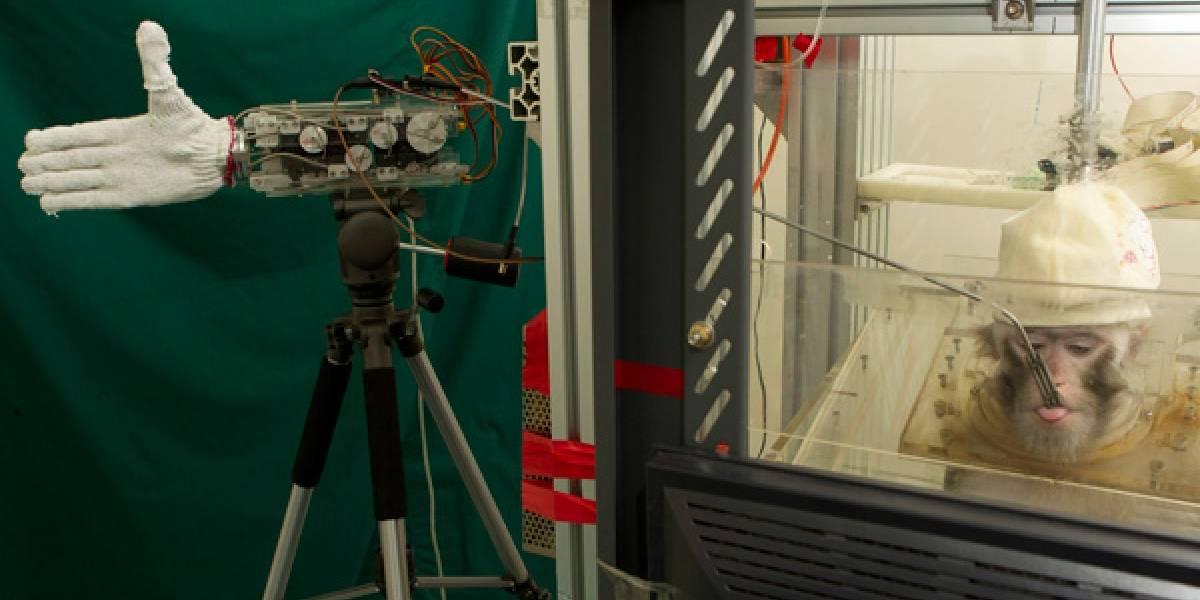 Aterrador: Mono controla mano robótica por medio de implantes cerebrales